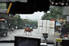 Road hazards (Roving I) Tags: taxis cabs driving traffic hazards street cows cattle livestock loads boxes motorcycles pedestriancrossings suburbs danang vietnam