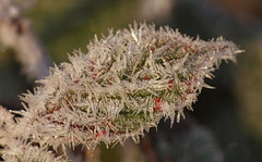2016_12_0535 (petermit2) Tags: winter frost clumberpark clumber sherwoodforest sherwood nottinghamshire nationaltrust nt
