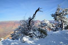 Grand Canyon 31 (Krasivaya Liza) Tags: grandcanyon grand canyon national park canyons nature natural wonder az arizona holiday christmas 2016 snowy winter cliffs cliffside edgeofcliff