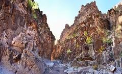 Closed Canyon (BongoInc) Tags: closedcanyon bigbendranchstatepark westtexas chihuahuandesert