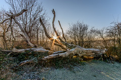 QANT-1-5 (Michael Yule - I Can See For Miles) Tags: nikon d7100 haresfield beacon stroud gloucestershire landscape national trust winter outdoors decay trees