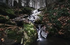 (desomnis) Tags: winter frost cold nature longexposure wood woods woodland mühlviertel oberösterreich upperaustria österreich austria böhmerwald bohemianforst ice icy frozen green desomnis tamron2470mm