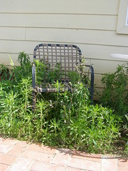Would you like to sit & visit awhile? (SanDiegoMama) Tags: chair green weeds spring