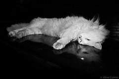 Reflexo (alinecotrimfotografia@gmail.com) Tags: bw pet white black reflection car cat pb gato carro reflexo