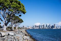 Sunday Bay (maida0922) Tags: ocean california street blue sea summer sky people tree skyline clouds marina buildings bay coast downtown cityscape sandiego a7r sonnartfe55mmf18