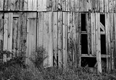 Side of a Barn (Neil Kesterson) Tags: blackandwhite bw usa film barn analog rural 35mm farm lexington kentucky ky voigtlander rangefinder manual filmscan fayettecounty perceptol vitessa ilfordperceptol perceptol13 fomapanfomapan100classic
