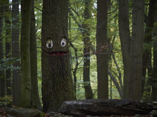 Baum Ernie