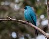 _DSC0805 (Dato' Professor Dr. Jamaludin Mohaiadin) Tags: birds nikon dr hills malaysia fraser prof melayu dato 400mm burung jamaludin mohaiadin d800e