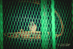 Net (Y's Photo moment) Tags: color green bird net freedom nex3n