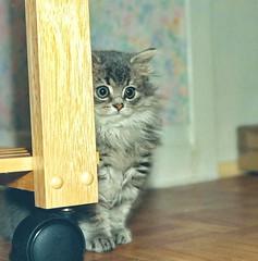 00382 (d_fust) Tags: cat kitten gato katze  macska gatto fust kedi  anak katt gatito kissa ktzchen gattino kucing   katje     yavrusu