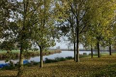 Herfst in Almere-Buiten/Autumn in Almere-Buiten (truus1949) Tags: water bomen wandelen herfst natuur almerebuiten
