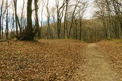 November 29 Forest 1 (Johan Pipet 2M+ views) Tags: park autumn trees fall nature les forest canon devin europe eu greenwood hora slovensko slovakia palo bratislava strom bartos dubravka jeseň dúbravka g5x bartoš