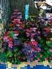 IMG_8047 (Festi'briques) Tags: montagne dragon lego exposition fantasy nancy hotdogs caverne fantastique 2015 scoubidou festibriques ludibriques