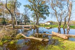 Karacabey Longozu (Nejdet Duzen) Tags: trip travel lake reflection tree home nature forest turkey outdoor trkiye ev bursa aa gl yansma orman turkei seyahat doa longoz karacabey