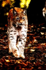 Luchs im Herbstwald  - Lynx in autumn forest (vampire-carmen) Tags: luchs lynx raubtier raubkatze predator beastofprey bigcat wald forest herbst autumn bayerwaldtierparklohberg cham oberpfalz bayern bavaria deutschland germany alemania europe hdr redfieldpluginfractalius canoneos600d    rrqebull vaaq katamotza ris  amphaka  linko ilves musang lince         linx   lsis lis sakadia lini   gaupe  ry rs  lioncs lodjur kangna  gingmorng    vaak  hiz  silovsini coedwig  skog