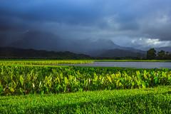 Hanalei Valley (Adam Claeys) Tags: grass plant ocean river serene outdoor sky grassland fresh green mountains clouds weather hawaii kauai hanalei valley landscape canon vast taro