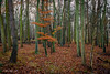 Autumn Leaves (johnboy!) Tags: ickworthpark ickworthhouse ickworth deadtrees nationaltrust