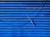 nel blu, dipinto di blu... (bruce grant) Tags: persiana fio azul