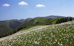 Monte Garda - Col dei Piatti