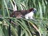 IMG_9076 (dstylebda) Tags: colonpanama gatunlake tamarins howlermonkeys sloth