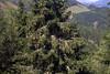 19-IMG_9151 (hemingwayfoto) Tags: österreich alpen baum berge fichte hohetauern landschaft rauris reiseziel tannenbaum tourismus wandern