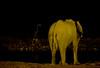 A drink before bed (Chris Denning Photos) Tags: giraffe elephant waterhole night drinking okaukuejo etosha september saltpan subsaharan africa