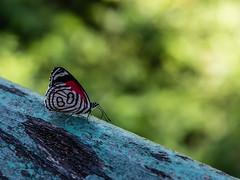 Sobre verde (cmarga28) Tags: mariposa natural naturaleza verde cerca photography photographer green butterfly color colour nikon digital raw s750