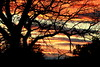 Sunset Silhouette .... (acwills2014) Tags: silhouette sunset colour color branches tree oak