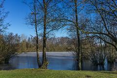 See im Winter (Peter L.98) Tags: see eis himmel bäume wiese sonya6000 dortmund