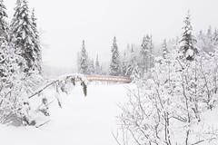 Féérie d'hiver / Winter beauty (Sylvain Prince) Tags: