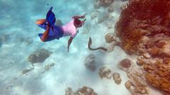 Land of Belize 2017 (James Patterson) Tags: belize thisislife cayecaulker island islandlife goslow snorkel snorkelling aquatic caribbean gopro goprohero5black adventure travel eel morayeel