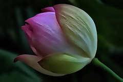 Carnegie Center_6 (samramahmoud) Tags: sony zeiss sonnart18135 flower