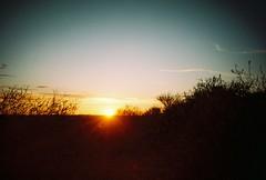 broken hill, january 2016 (kodacolorframes) Tags: lomo lca film 35mm analogue fujiproplusii100 australia brokenhill sunset dusk sculpturepark