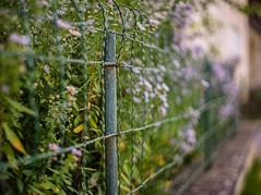 Rusty (*Capture the Moment* (back 4 September)) Tags: 2016 autumn bokeh bokehleicalenses dof deutschland farbdominanz fence fränkischeschweiz germany herbst leicasummiluxm leitzsummiluxm1450 leitzleica metal metall sonya7m2 sonya7mii sonya7ii zaun bokehlicious green grün