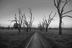 The Path (World-viewer) Tags: outdoor monochrome bw black white trees field meadow grass sony ilce6000 a6000 spooky scenic artistic nice countryside country sflocal rural hiking trail park california ngc travel landscape blue hour bluehour sunset tree arbor arboreal