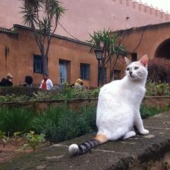 Katsbah! (AJoStone) Tags: morocco rabat kasbah des oudaias cat