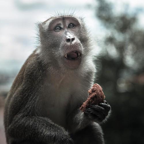 Pitiful monkey #malaysia #kualalumpur #batucaves