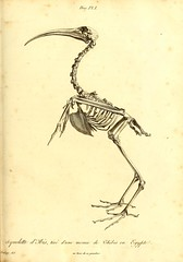 n162_w1150 (BioDivLibrary) Tags: france fossil paleontology geology parisregion smithsonianlibraries mammalsfossil vertebratesfossil bhl:page=41587844 dc:identifier=httpbiodiversitylibraryorgpage41587844