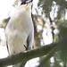 goofy heron
