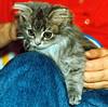 00366 (d_fust) Tags: cat kitten gato katze 猫 macska gatto fust kedi 貓 anak katt gatito kissa kätzchen gattino kucing 小貓 고양이 katje кот γάτα γατάκι แมว yavrusu 仔猫 का skorpi बिल्ली बच्चा