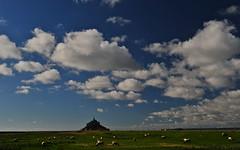 paissent les blancs moutons (jean-marc losey) Tags: normandie montstmichel baie préssalés