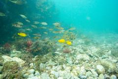 20150926-DSC_6281.jpg (d3_plus) Tags: sea sky fish beach japan scenery underwater diving snorkeling  shizuoka    apnea izu j4           nikon1 togai  1030mm nakagi  1   1030mmpd wpn3
