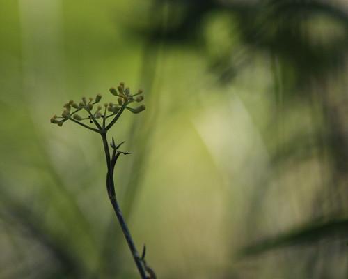 """D'aussi loin que j'en revienne, ce monde là était vert • <a style=""""font-size:0.8em;"""" href=""""http://www.flickr.com/photos/125430208@N07/21970824308/"""" target=""""_blank"""">View on Flickr</a>"""