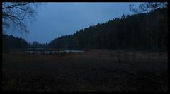 Pond of The Dead (Eline Lyng) Tags: leica longexposure halloween nature water norway landscape dead pond dusk spooky larkollen leicaq summilux28mm