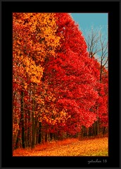 The Red Zone (the Gallopping Geezer 3.8 million + views....) Tags: trees red color nature colors leaves mi rural canon landscape leaf fallcolor michigan country change geezer corel 2015 colorchange changeisgood fallcolorchange