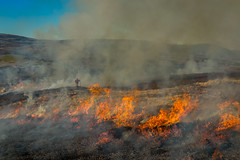 Burning Heather-2263 (avaird44) Tags: fire scotland aberdeenshire smoke burning moor ballater biodiversity glengairn