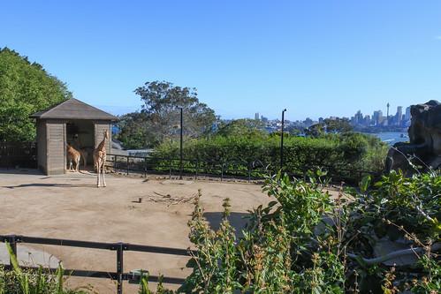 Thumbnail from Taronga Zoo