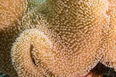 DSC02422 (Martin Flemig) Tags: underwater diving scubadiving kamera tauchen malediven unterwasser nex7 helengeliislandresort