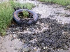 Debris (essex_mud_explorer) Tags: river mud salt estuary flats marsh riverthames mudflats tidal saltmarsh