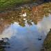Wasserpfütze ... (2)